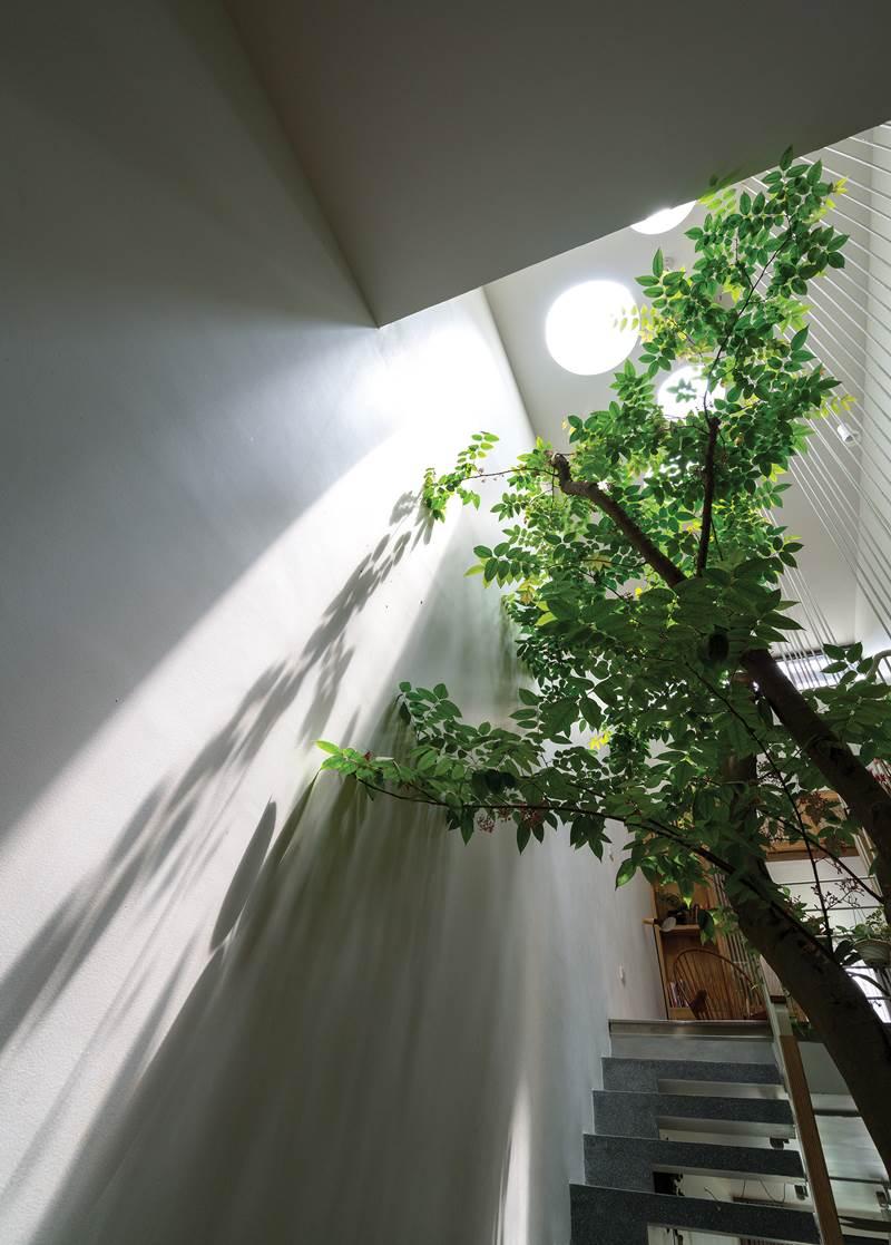 Ngôi nhà đầy ánh sáng