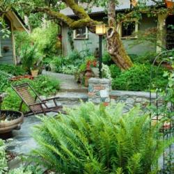 Vườn nhà đẹp